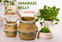 seagrass_belly_banner